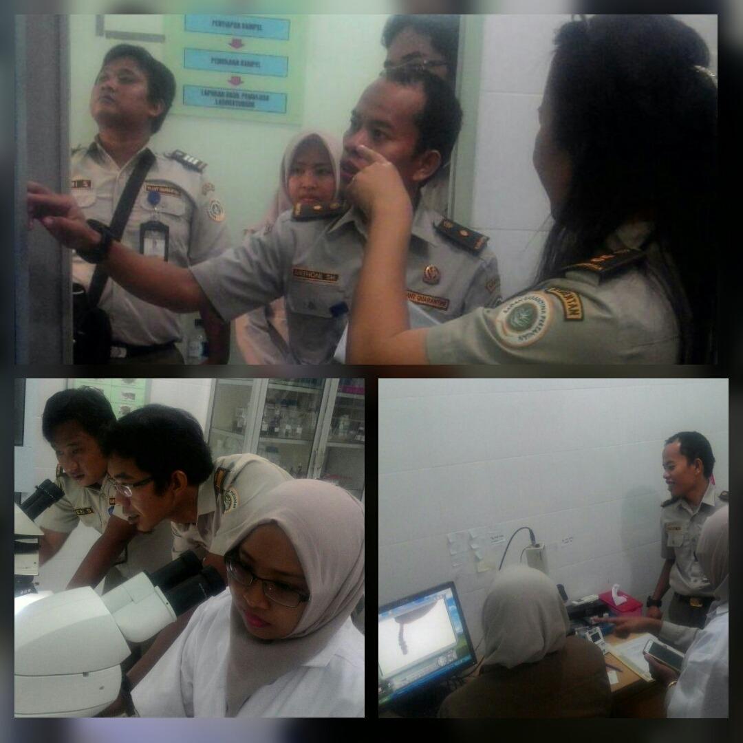 Karantina Pertanian Tanjung Balai Karimun Lakukan Magang Persiapan Akreditasi Laboratorium di BKP Kelas II Tanjungpinang